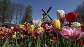 Taman Bunga Keukenhof di Lisse, Belanda.Belanda sedang berwarna-warni karena kebun Bunga Tulis di sana sedang bermekaran pada bulan ini. (REUTERS/Yves Herman)