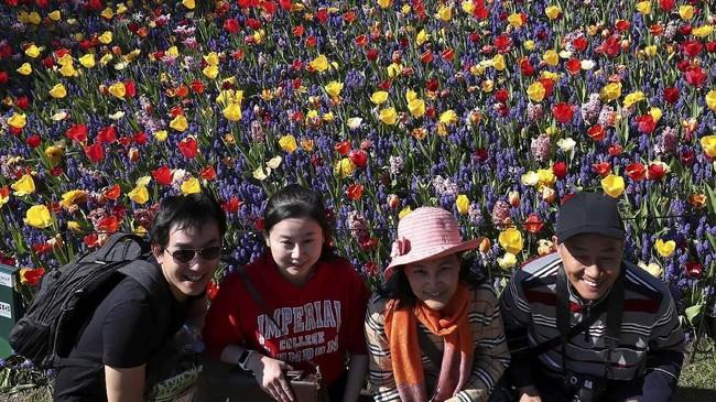 Turis terlihat menyemut di kebun Bunga Tulis yang ada di Negara Kincir Angin. Tercatat 1 juta turis mancanegara mendatangi kebun-kebun Bunga Tulip pada liburan Paskah kemarin. (REUTERS/Yves Herman)