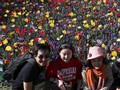 'Turis Selfie' Jadi Ancaman Taman Bunga Tulip Belanda
