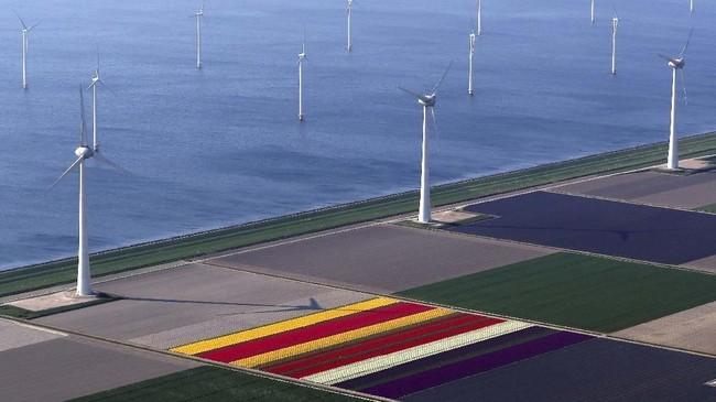 Bunga Tulip mulai bermekaran di Belanda mulai April. Festival Bunga Keukenhof merupakan destinasi wisata utama untuk menyaksikan musim mekarnya. (REUTERS/Yves Herman)