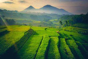 Sssttt... Ternyata ada Kampung 'Thanos' di Jawa Barat Lho