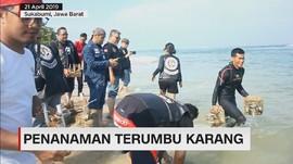 VIDEO: Aksi Pencinta Moge Tanam Terumbu Karang di Sukabumi