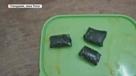 VIDEO: Penyelundupan Narkoba dalam Kepala Ikan Lele