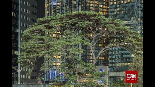 Tahun 2002 - 2007 polusi udara CO2 di DKI Jakarta meningkat dari 187,4 mg/m2 menjadi 300,0 mg/m2 (Samsoedin dan Waryono, 2010). Salah satu upaya untuk meredam persoalan lingkungan tersebut adalah keberadaan dan pengembangan hutan kota. (CNN Indonesia/Adhi Wicaksono)