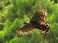 Jejak Garuda 'Penguasa Langit Jawa' di Tanah Gede Pangrango