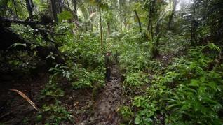 5 Taman Nasional yang Menjadi Rumah Satwa Khas Indonesia
