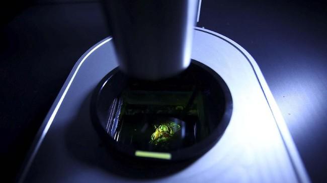 Namun, organ yang dicetak dalam bentuk tiga deminsi tidak memiliki struktur rinci karena dibuat berdasarkan gambar dari komputer tomografi atau mesin MRI.(REUTERS/Michael Dalder)