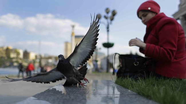 Di pusat kota Kiev, Ukraina, Seorang perempuan memberi makan burung merpati. (AP Photo/Sergei Grits)