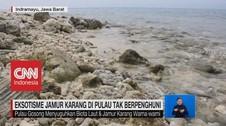 VIDEO: Eksotisme Jamur Karang di Pulau Tak Berpenghuni