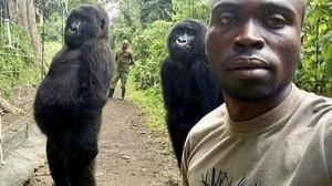 Kisah Persahabatan di Balik Foto Selfie Gorila yang Viral