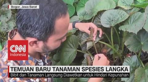 VIDEO: Begonia & Alpinia, Temuan Baru Tanaman Spesies Langka