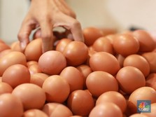 Waduh, Harga Telur Ayam Sudah Mulai Menggila