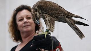 FOTO:  Rumah Sakit Burung Elang Terbesar di Dunia