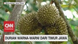VIDEO: Mencicipi Durian Warna-Warni Dari Jawa Timur
