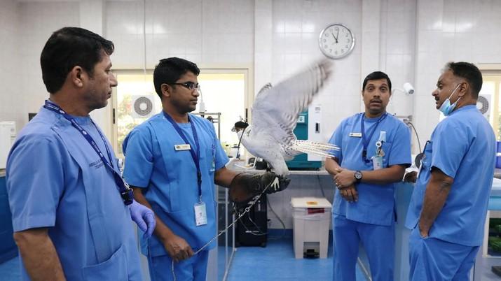 Intip Rumah Sakit Khusus Burung Elang di Abu Dhabi Arab