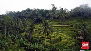 Ubud Bersiap Masuk Daftar Destinasi Gastronomi UNWTO
