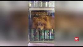 VIDEO: Kepanasan, Anjing di Thailand 'Berteduh' dalam Kulkas