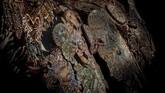 Detail jubah yang disebut 'caparison' dari dekat. Mengerjakan satu jubah ini membutuhkan waktu satu tahun. (AP Photo/Bernat Armangue)