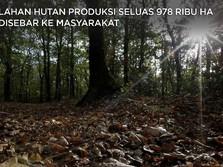 Hampir 1 Juta Ha Lahan Hutan Produksi Dibagi ke Masyarakat