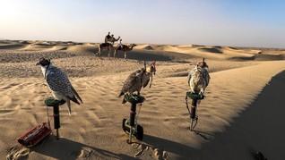 Alap-alap, Burung Predator Kesayangan Timur Tengah