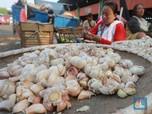 Kutukan Impor Bawang Putih, Triliunan Rupiah Mengalir Deras