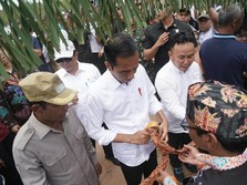 Jokowi Akui Ibu Kota Baru di Kalimantan, Tapi Bagian Mana?