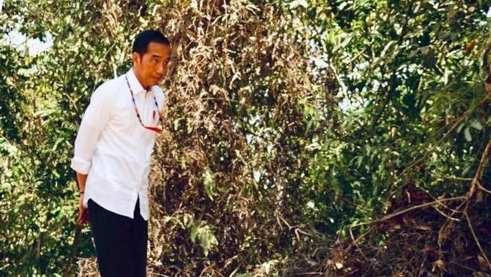 Ibu Kota Pindah, Tanah Kalimantan 'Digoreng' di Toko Online