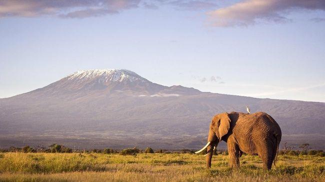 Kereta Gantung Bakal Beroperasi di Gunung Kilimanjaro