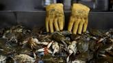 Sarung tangan bekas terlihat di samping baki milik toko Maryland Blue Crabs di pasar ikan Maine Avenue di Washington, Amerika Serikat. (REUTERS/Clodagh Kilcoyne)