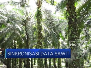 Kementan Segera Sinkronisasi Data Sawit