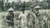 Foto hasil reproduksi empat tahanan politik saat melakukan panen padi di Pulau Buru. Kala itu para tahanan kerap diperlakukan bagai budak, dipukuli dan dipaksa bekerja. (ANTARA FOTO/Hafidz Mubarak A)