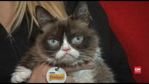 VIDEO: Kucing Meme Grumpy Cat Mati di Usia 7 Tahun
