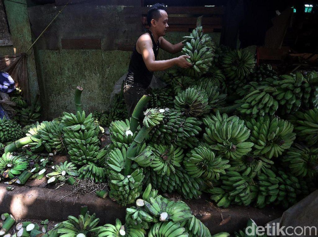 Seorang pedagang menata pisang dengan cara ditumpuk di Pasar Kramatjati.