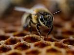 Fenomena Alam di Tengah Pandemi: Ada Kiamat Serangga!