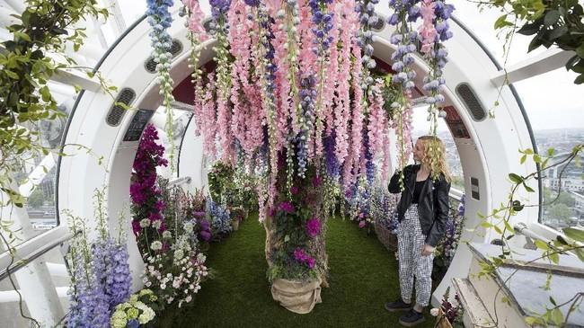 Inggris menggelar pameran bunga paling prestisius dan bergengsi, Chelsea Flower Show. (REUTERS/Simon Dawson)