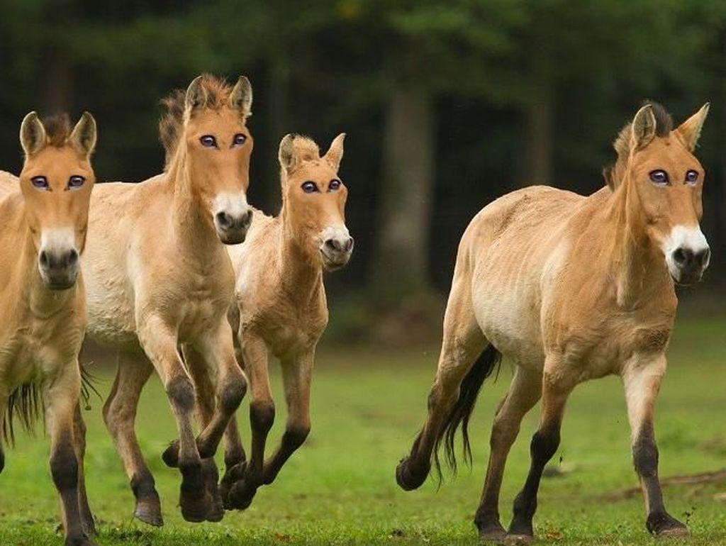 Mata kuda kalau di depan bikin lebih kencang tidak ya larinya? Foto: sadanduseles