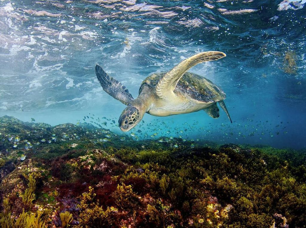 Karya Steven Kovacs yang menjadi finalis di kategori Aquatic Life. Foto: bigpicturecompetition