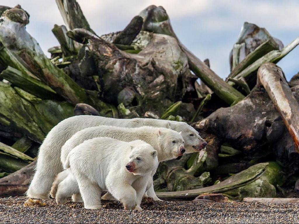 Karya Daniel Dietrich yang menjadi finalis di kategori Terrestrial Wildlife. Foto: bigpicturecompetition