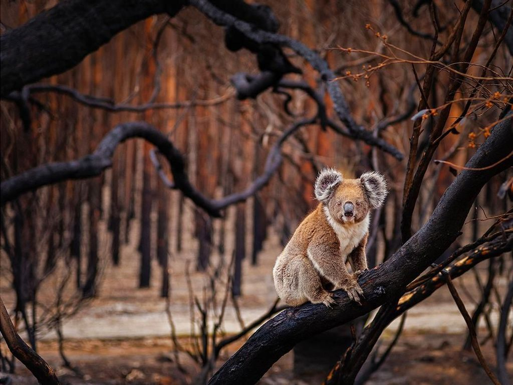 Karya Vivonne Bay yang menjadi finalis kategori Terrestrial Wildlife. Foto: bigpicturecompetition