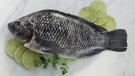 Manfaat Ikan Tilapia bagi Kecukupan Gizi Anak Indonesia