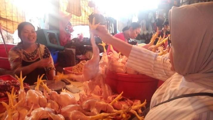 Daging Ayam Berpotensi Naik, Saham Pakan Ternak Mulai Dilirik
