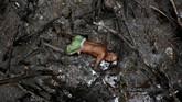 Seorang nelayan bernama Jose da Cruz yang juga dijuluki sebagai Vampir karena bentuk giginya, menangkap kepiting di dalam hutan mangrove di sungai Caratingui di Cairu, Bahia, Brasil. (REUTERS/Nacho Doce)