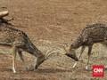 Corona, Kebun Binatang di Texas Terapkan Konsep Drive-Thru