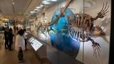 Fosil T.rex memang sudah lama dinanti oleh pihak Museum Smithsonian. Sebelumnya mereka kalah dari Chicago's Field Museum of Natural History dalam penawaran kepemilikan fosil T.rex yang hampir lengkap pada tahun 1997.