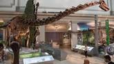 Pemandangan fosil Diplodocus dinosaur skeleton yang dipajang di 'National Fossil Hall'.
