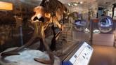 Pemandangan fosil mammoth di 'National Fossil Hall'.