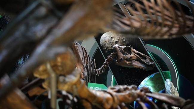 Pameran fosil T.rex ini merupakan sumbangan dari miliarder David Koch sebesar US$35 juta.