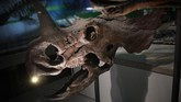 Ditempatkan di 'David H. Koch Hall of Fossils Deep Time', pameran baru yang menyertakan T.rex dibuka sejak 4 Juni 2019.