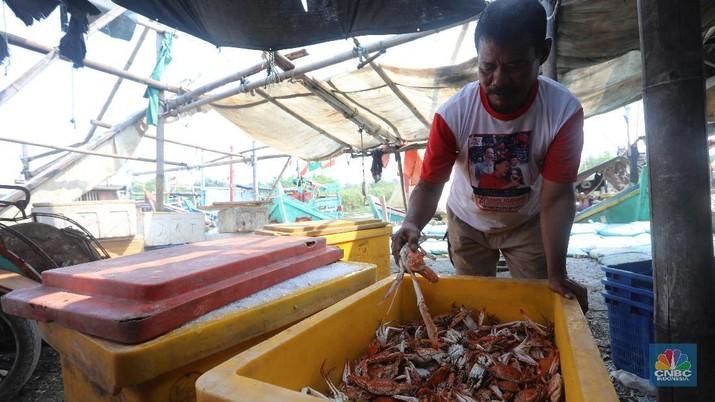 Nelayan Kabupaten Jepara, Jawa Tengah, membudidayakan rajungan dengan membuat tambak di laut guna mengurangi eksploitasi di laut.