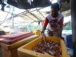 Budidaya Rajungan Pulau Panjang yang Hasilkan Cuan